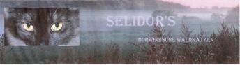Banner Selidors